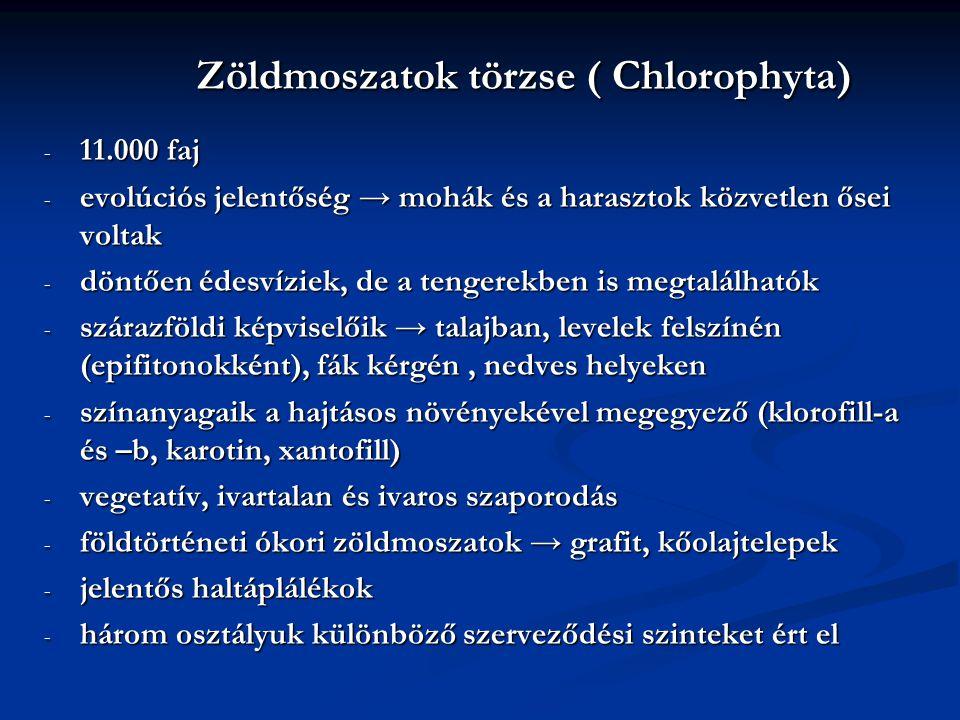 Zöldmoszatok törzse ( Chlorophyta)