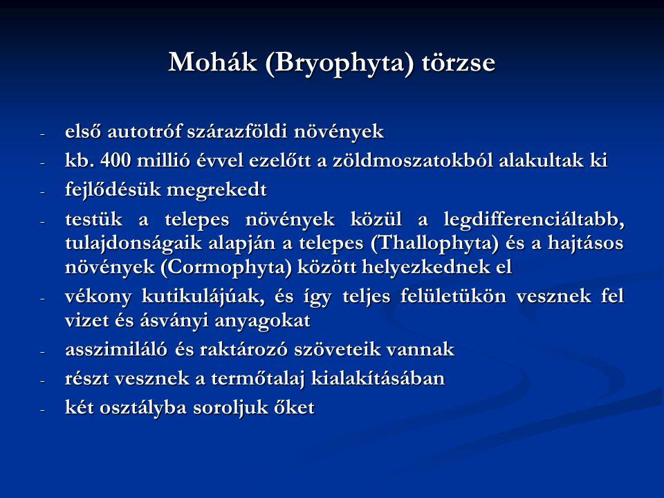 Mohák (Bryophyta) törzse