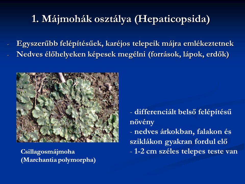 1. Májmohák osztálya (Hepaticopsida)