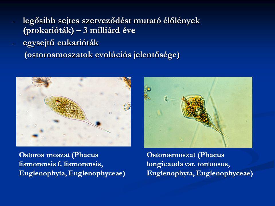 (ostorosmoszatok evolúciós jelentősége)