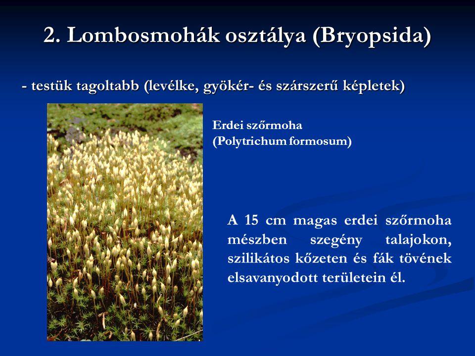 2. Lombosmohák osztálya (Bryopsida)