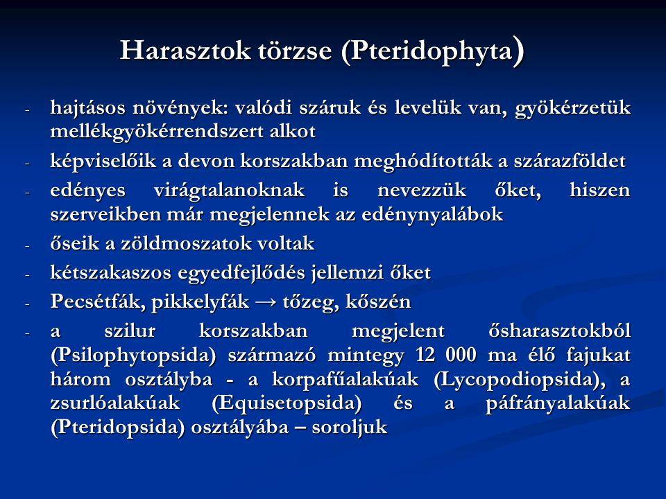 Harasztok törzse (Pteridophyta)