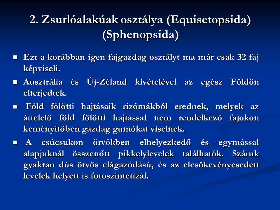 2. Zsurlóalakúak osztálya (Equisetopsida) (Sphenopsida)
