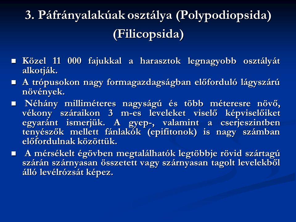 3. Páfrányalakúak osztálya (Polypodiopsida) (Filicopsida)