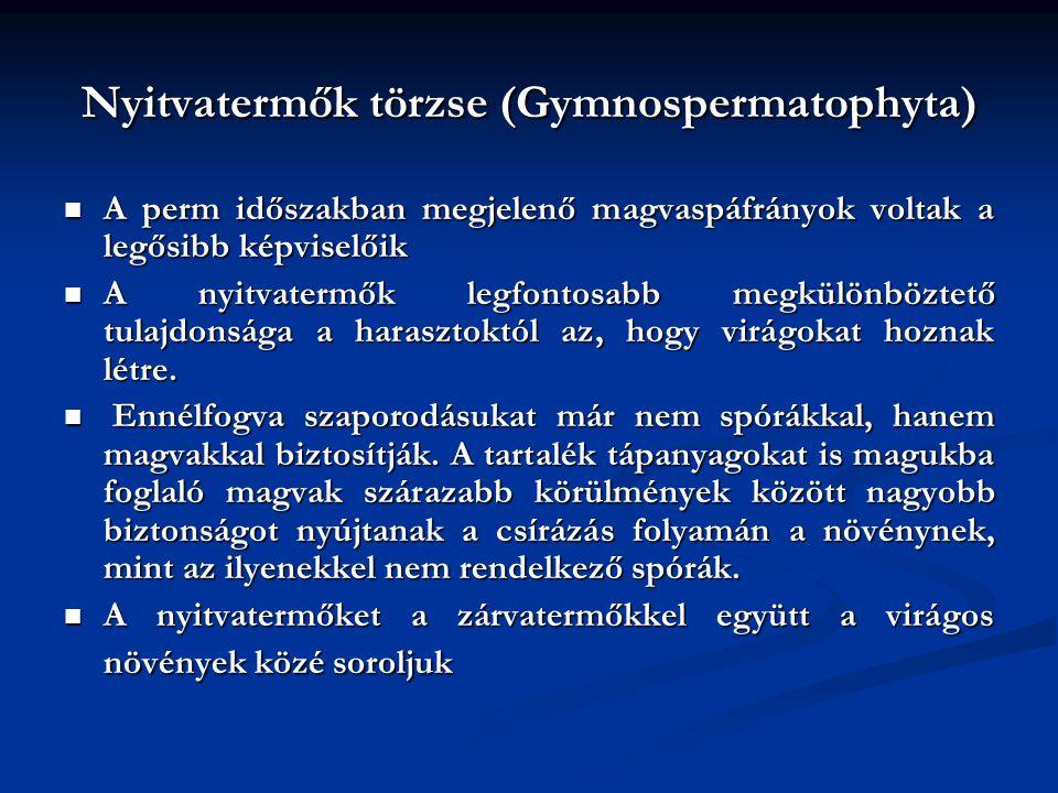Nyitvatermők törzse (Gymnospermatophyta)