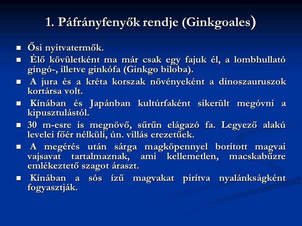 1. Páfrányfenyők rendje (Ginkgoales)