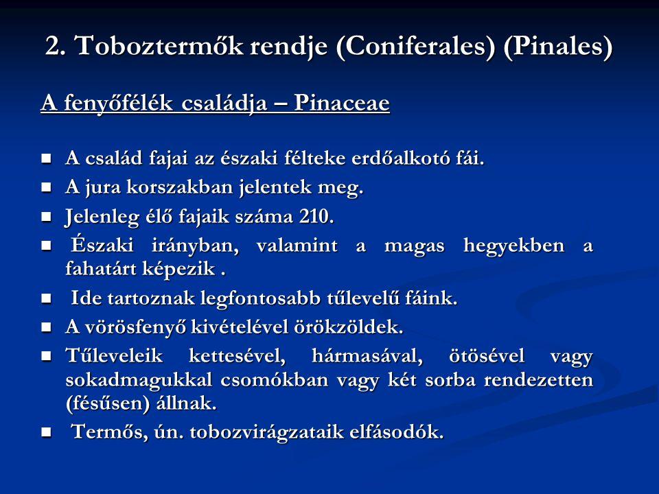 2. Toboztermők rendje (Coniferales) (Pinales)
