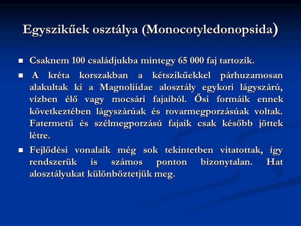 Egyszikűek osztálya (Monocotyledonopsida)