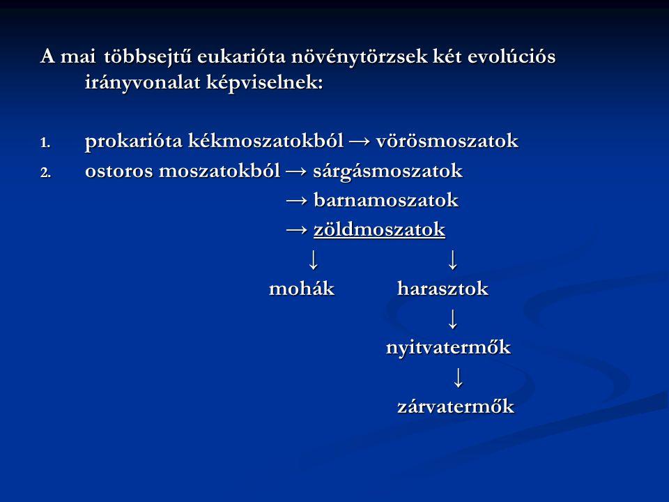 A mai többsejtű eukarióta növénytörzsek két evolúciós irányvonalat képviselnek: