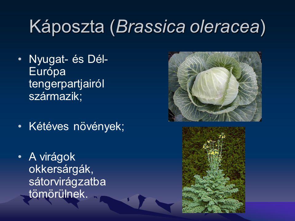 Káposzta (Brassica oleracea)