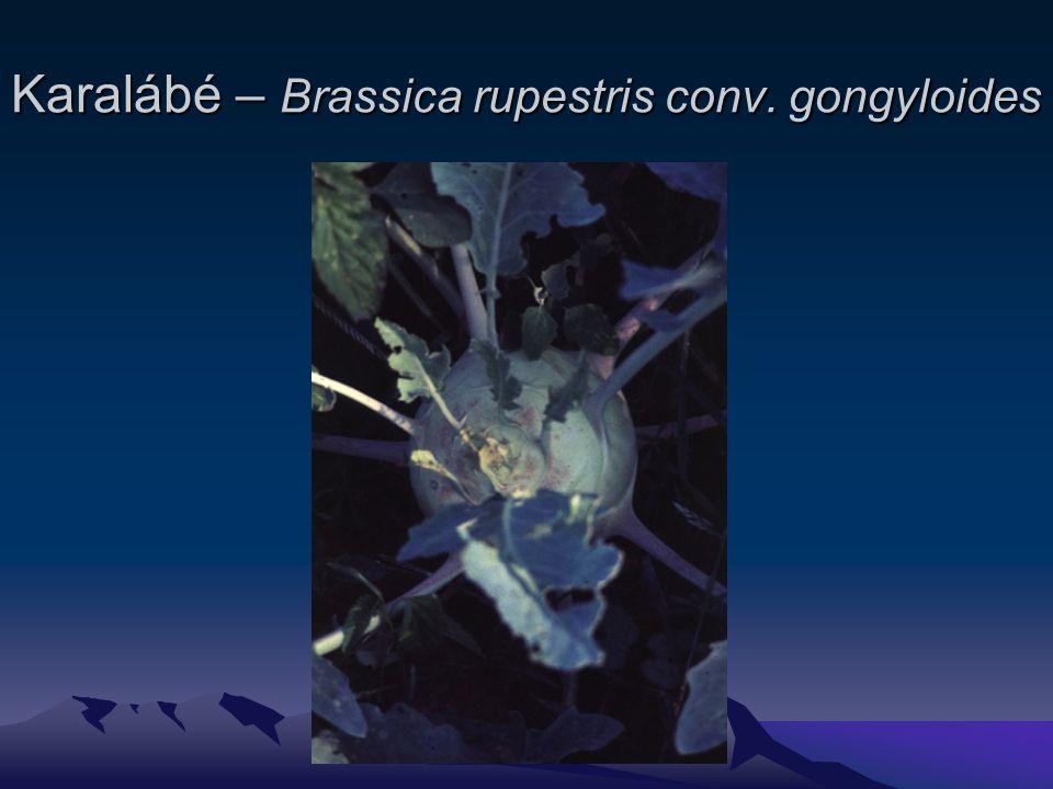 Karalábé – Brassica rupestris conv. gongyloides