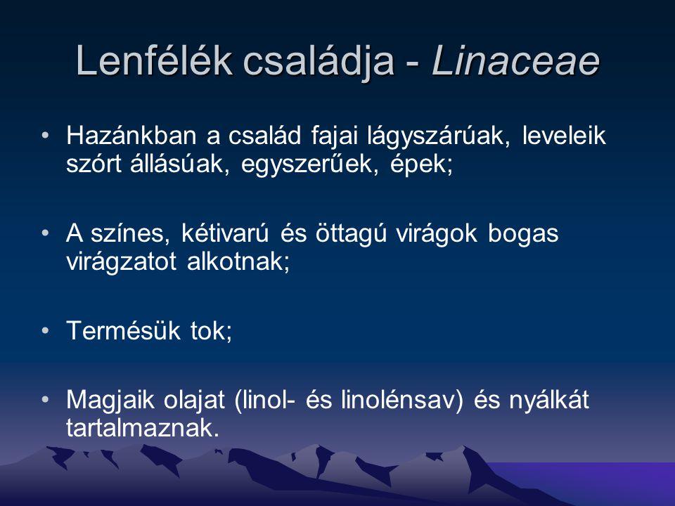 Lenfélék családja - Linaceae