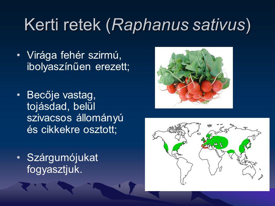 Kerti retek (Raphanus sativus)