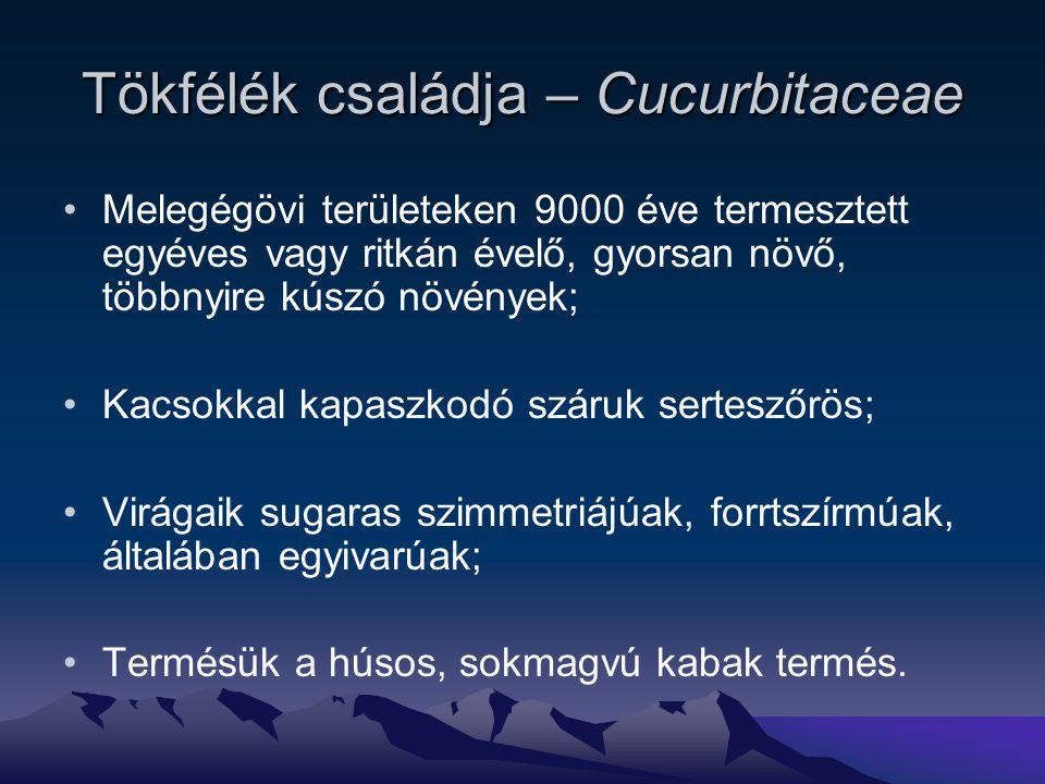 Tökfélék családja – Cucurbitaceae