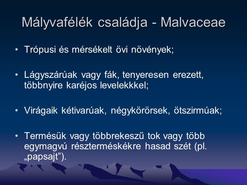 Mályvafélék családja - Malvaceae