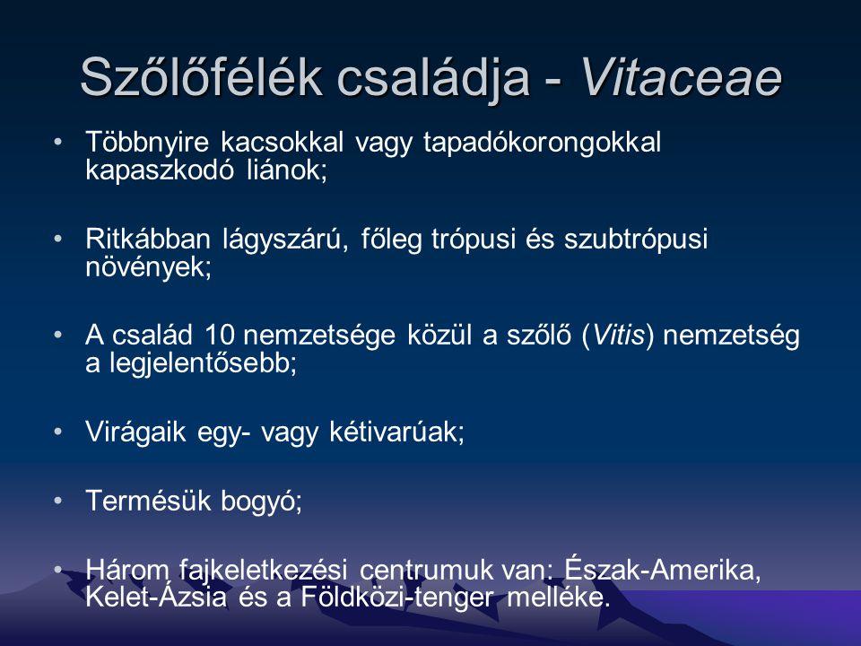 Szőlőfélék családja - Vitaceae