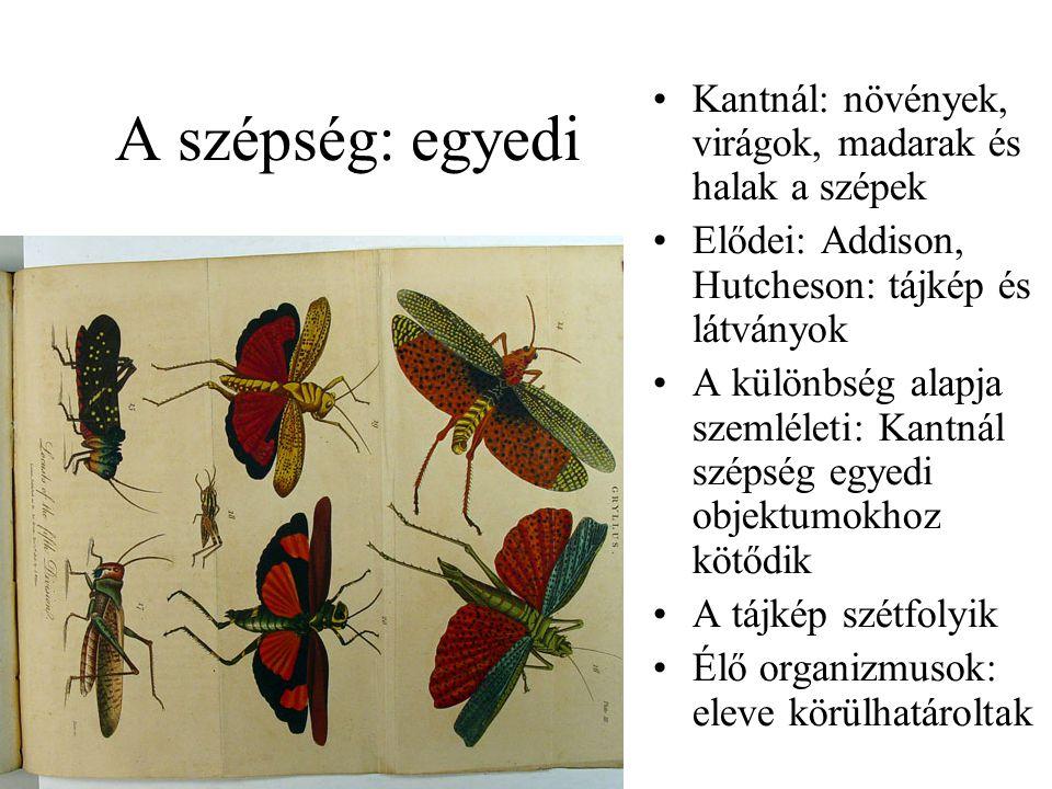 A szépség: egyedi Kantnál: növények, virágok, madarak és halak a szépek. Elődei: Addison, Hutcheson: tájkép és látványok.