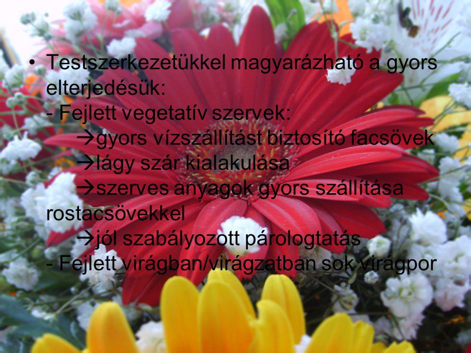 Testszerkezetükkel magyarázható a gyors elterjedésük: - Fejlett vegetatív szervek: gyors vízszállítást biztosító facsövek lágy szár kialakulása szerves anyagok gyors szállítása rostacsövekkel jól szabályozott párologtatás - Fejlett virágban/virágzatban sok virágpor