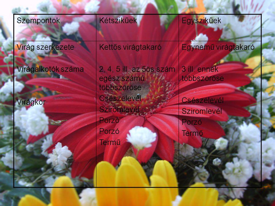 Szempontok Kétszikűek. Egyszikűek. Virág szerkezete. Virágalkotók száma. Virágkör. Kettős virágtakaró.