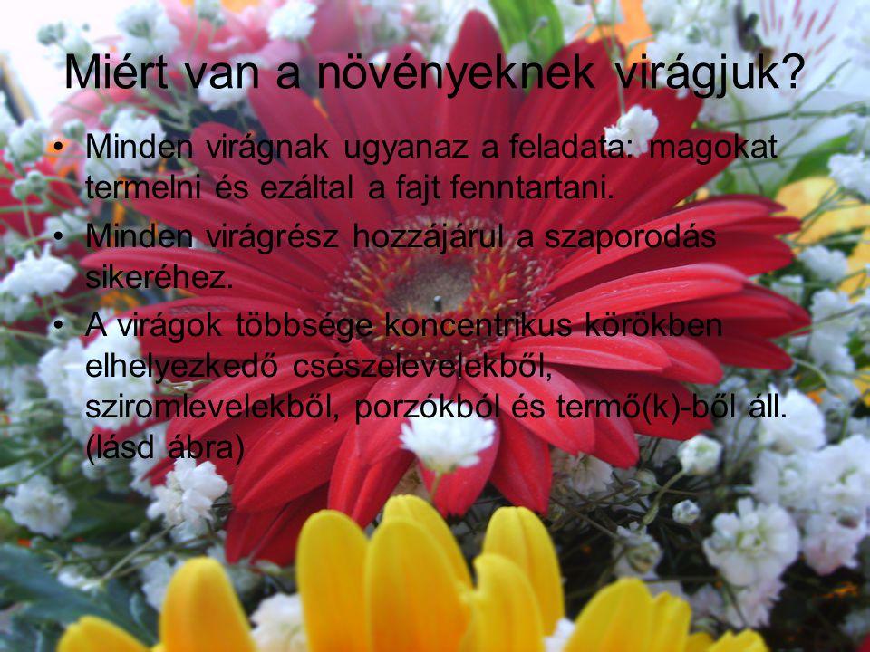 Miért van a növényeknek virágjuk