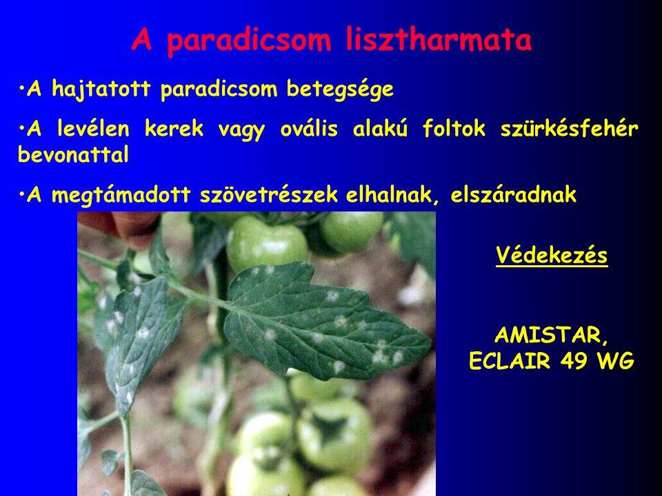 A paradicsom lisztharmata