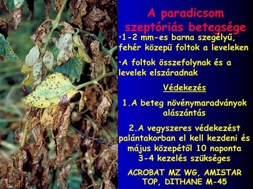 A paradicsom szeptóriás betegsége