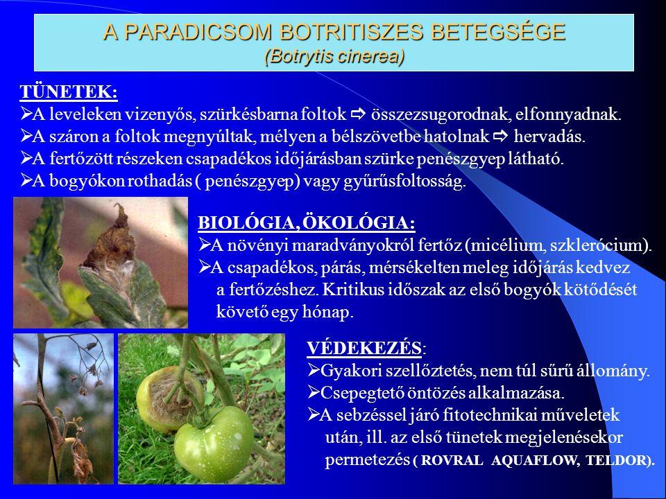 A PARADICSOM BOTRITISZES BETEGSÉGE (Botrytis cinerea)