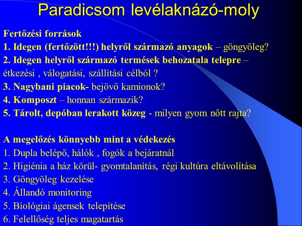 Paradicsom levélaknázó-moly