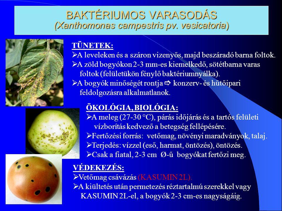 BAKTÉRIUMOS VARASODÁS (Xanthomonas campestris pv. vesicatoria)