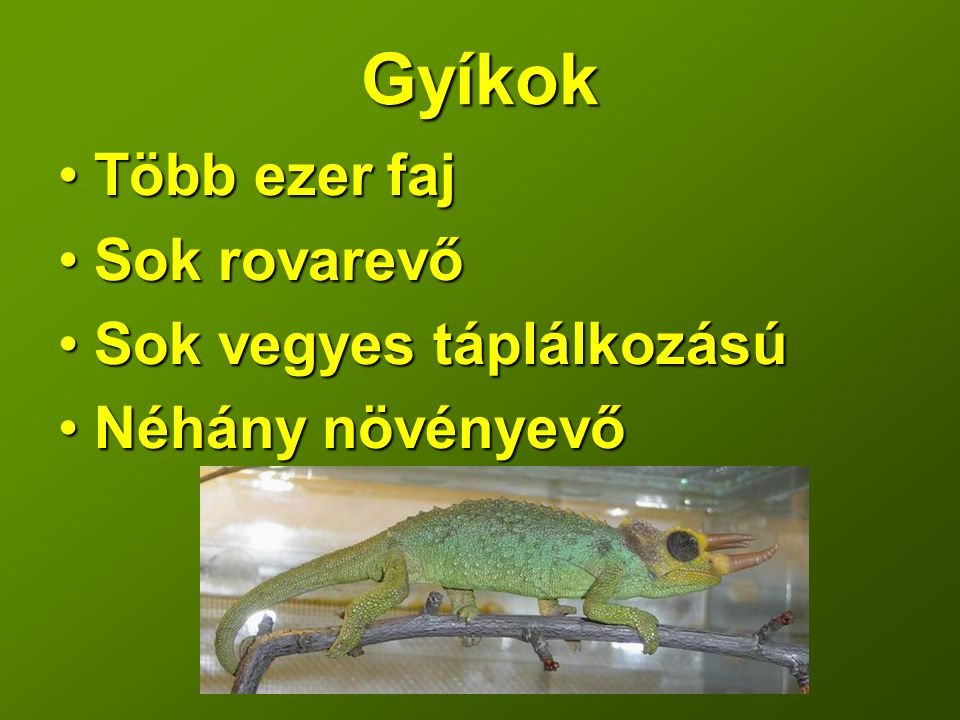 Gyíkok Több ezer faj Sok rovarevő Sok vegyes táplálkozású