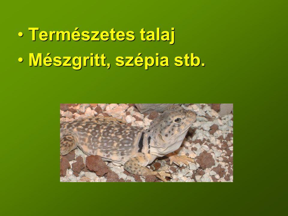 Természetes talaj Mészgritt, szépia stb.