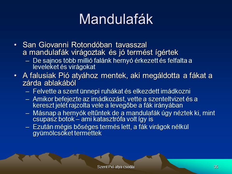 Mandulafák San Giovanni Rotondóban tavasszal a mandulafák virágoztak és jó termést ígértek.