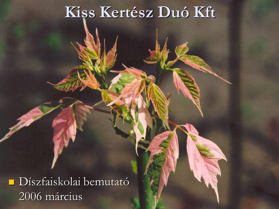 Kiss Kertész Duó Kft Díszfaiskolai bemutató 2006 március