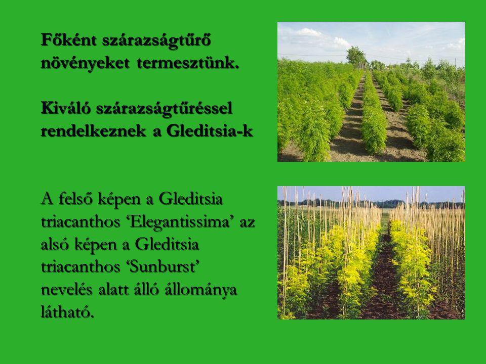 Főként szárazságtűrő növényeket termesztünk
