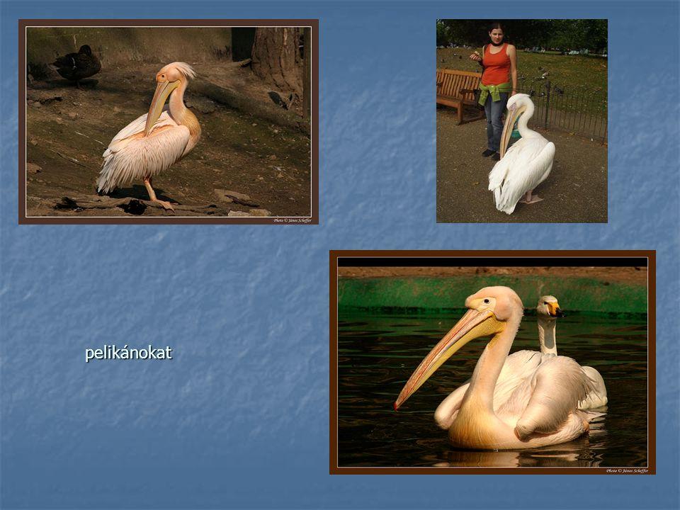pelikánokat