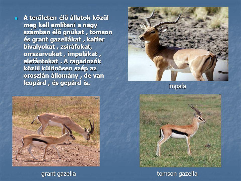A területen élő állatok közül meg kell említeni a nagy számban élő gnúkat , tomson és grant gazellákat , kaffer bivalyokat , zsiráfokat, orrszarvukat , impalákat , elefántokat . A ragadozók közül különösen szép az oroszlán állomány , de van leopárd , és gepárd is.