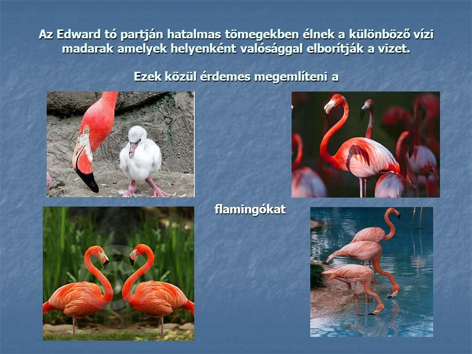 Az Edward tó partján hatalmas tömegekben élnek a különböző vízi madarak amelyek helyenként valósággal elborítják a vizet. Ezek közül érdemes megemlíteni a