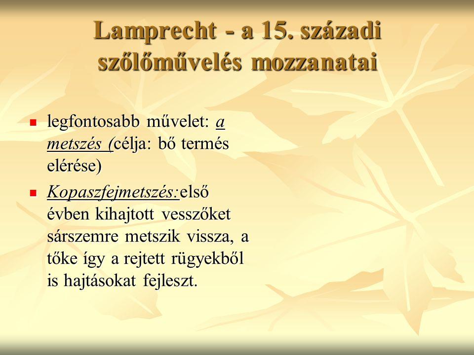 Lamprecht - a 15. századi szőlőművelés mozzanatai