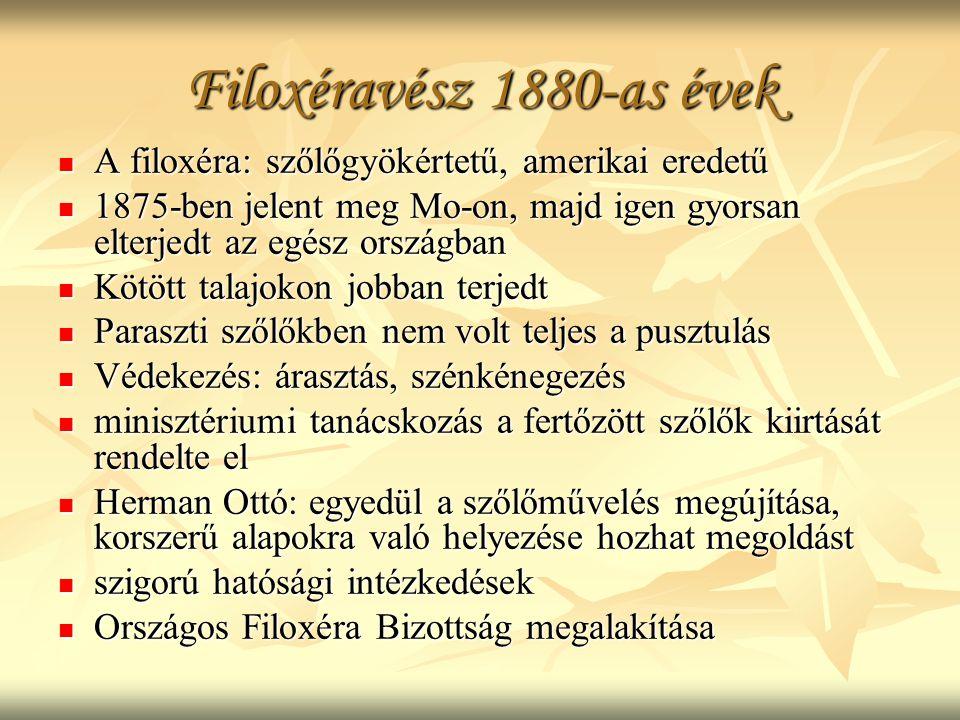 Filoxéravész 1880-as évek A filoxéra: szőlőgyökértetű, amerikai eredetű. 1875-ben jelent meg Mo-on, majd igen gyorsan elterjedt az egész országban.