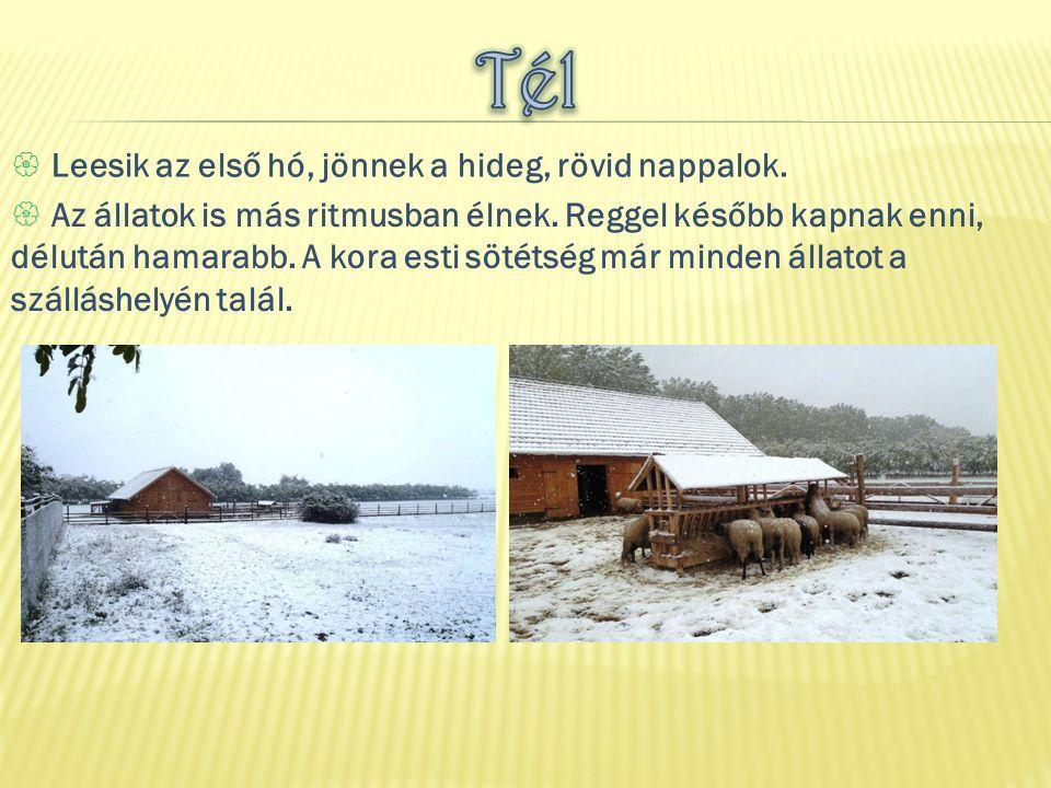 Tél Leesik az első hó, jönnek a hideg, rövid nappalok.