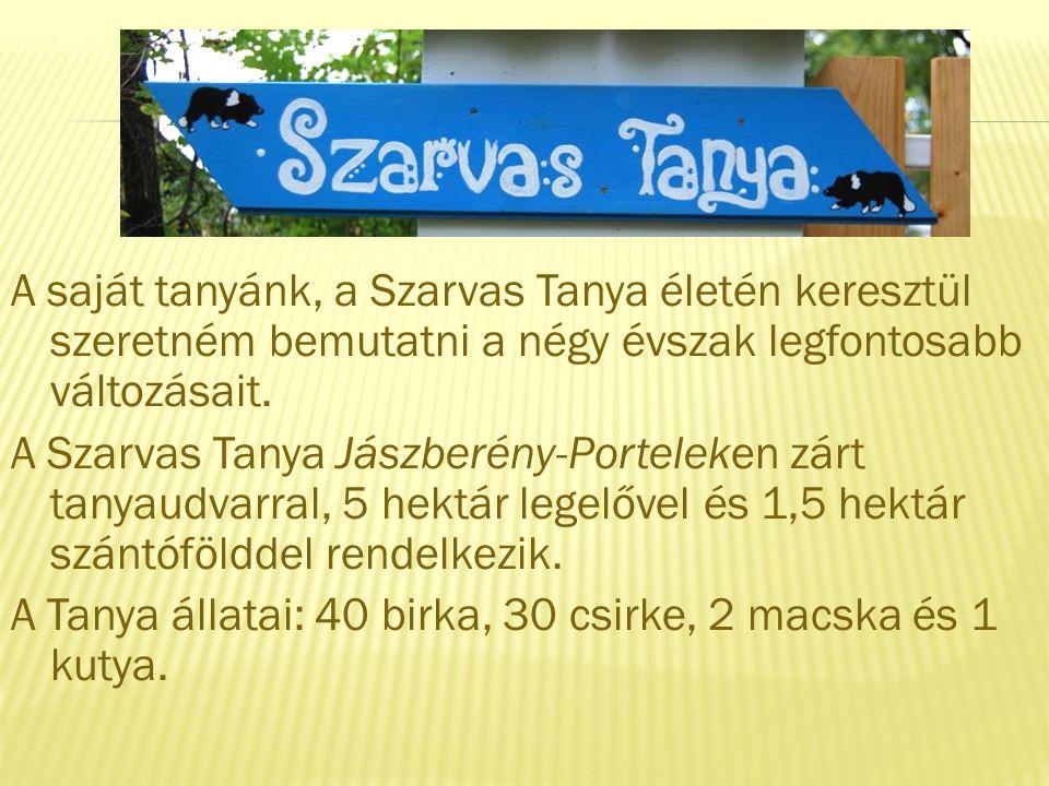 A saját tanyánk, a Szarvas Tanya életén keresztül szeretném bemutatni a négy évszak legfontosabb változásait.