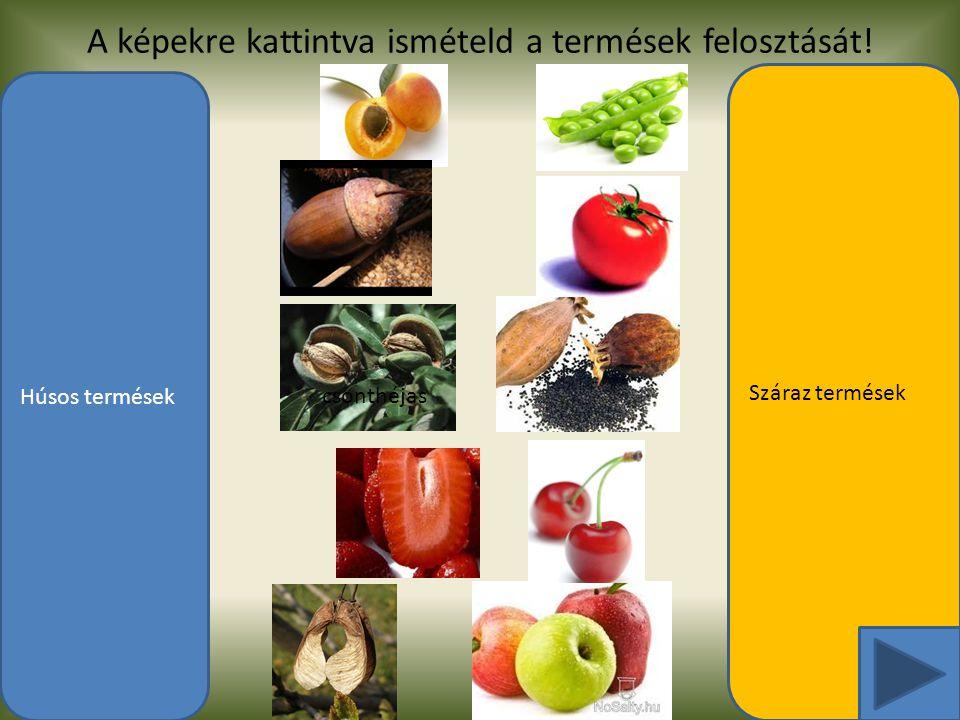 A képekre kattintva ismételd a termések felosztását!