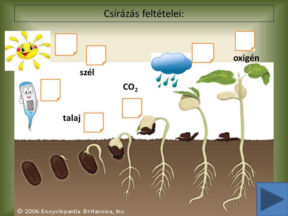 Csírázás feltételei: oxigén szél CO2 talaj