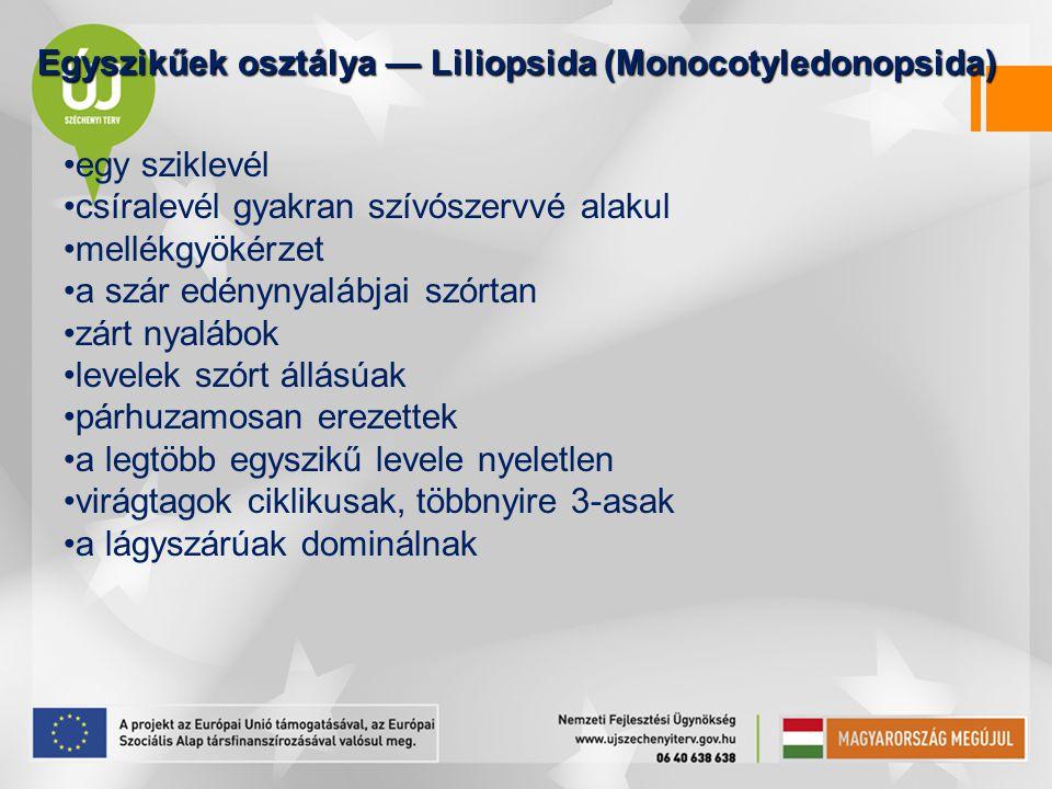 Egyszikűek osztálya — Liliopsida (Monocotyledonopsida)