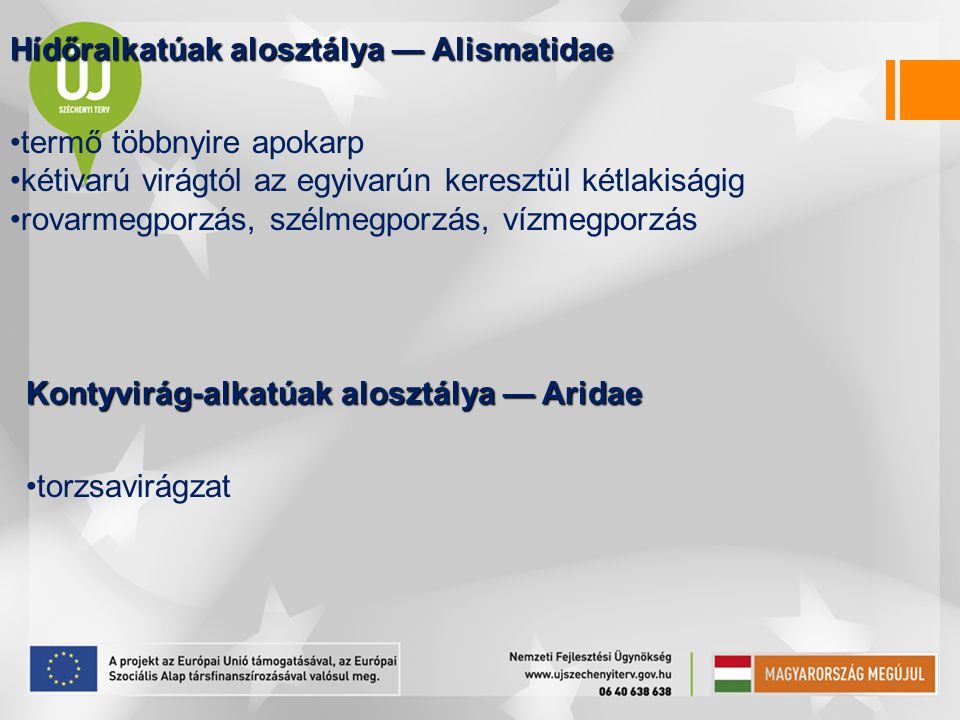 Hídőralkatúak alosztálya — Alismatidae