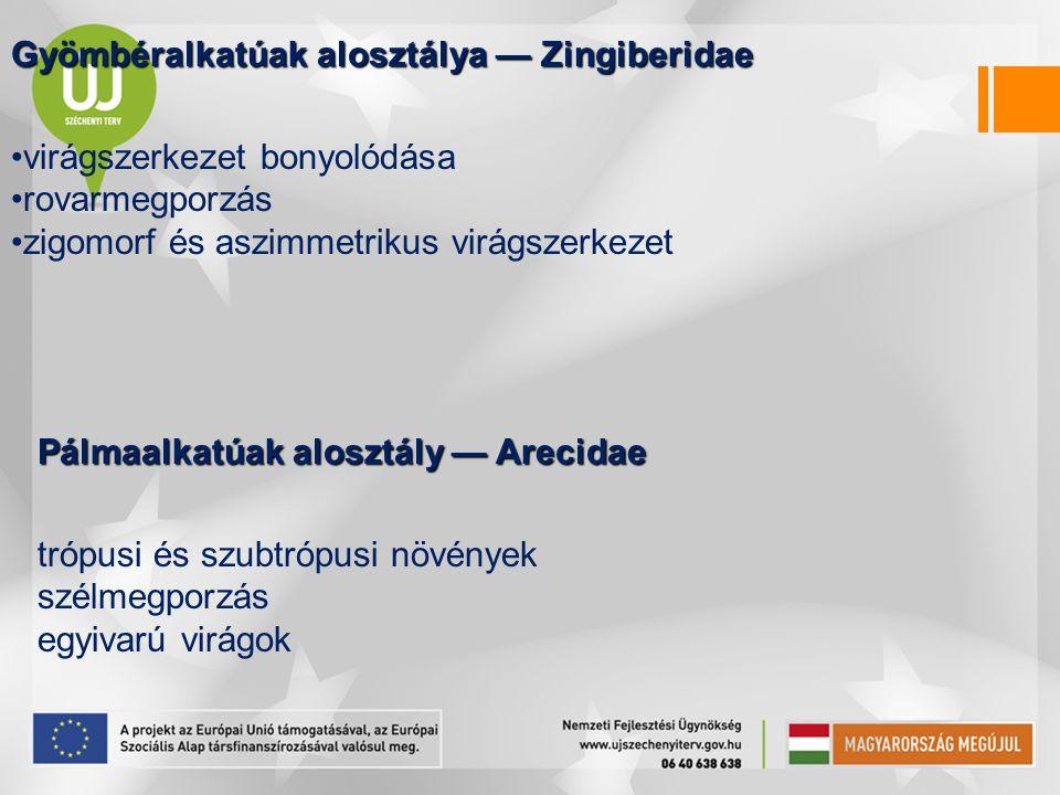 Gyömbéralkatúak alosztálya — Zingiberidae