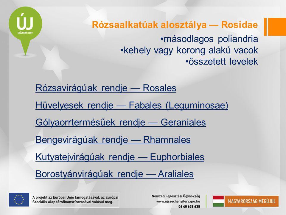 Rózsaalkatúak alosztálya — Rosidae