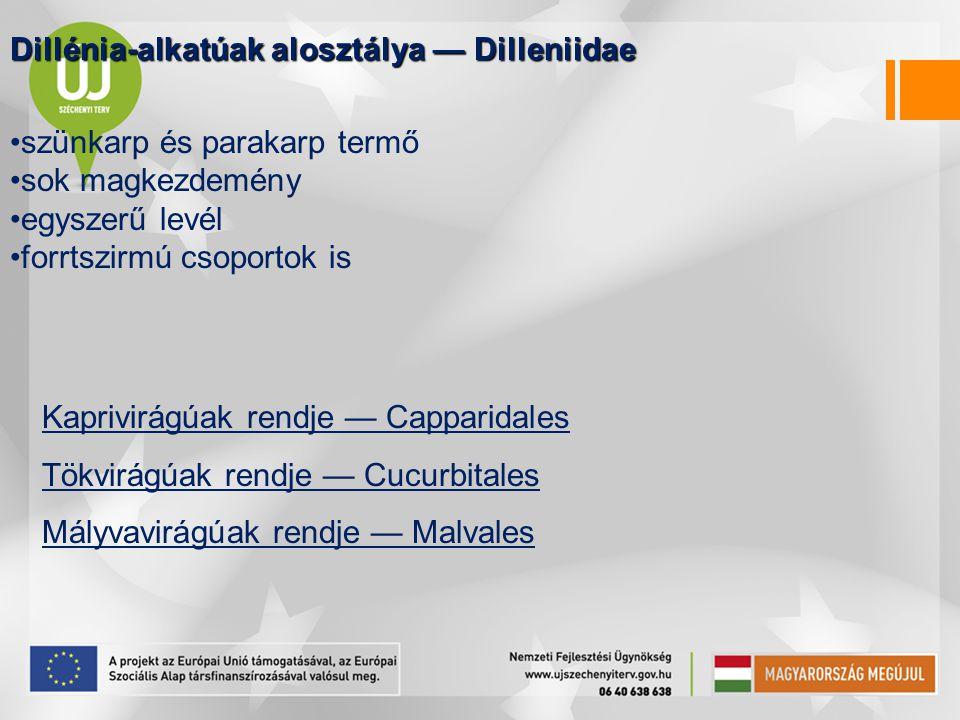 Dillénia-alkatúak alosztálya — Dilleniidae