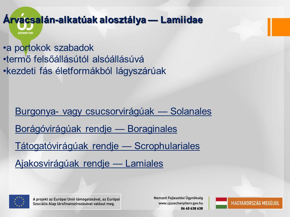 Árvacsalán-alkatúak alosztálya — Lamiidae