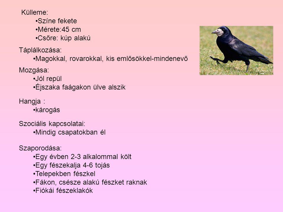 Külleme: Színe fekete. Mérete:45 cm. Csőre: kúp alakú. Táplálkozása: Magokkal, rovarokkal, kis emlősökkel-mindenevő.